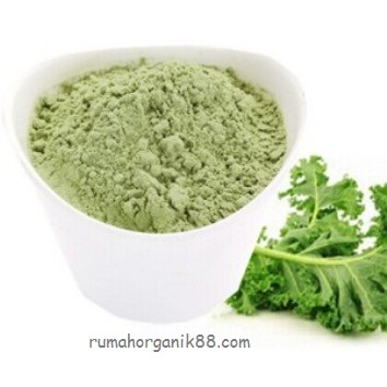 Supply-Food-Addtives-Natural-Kale-Powder